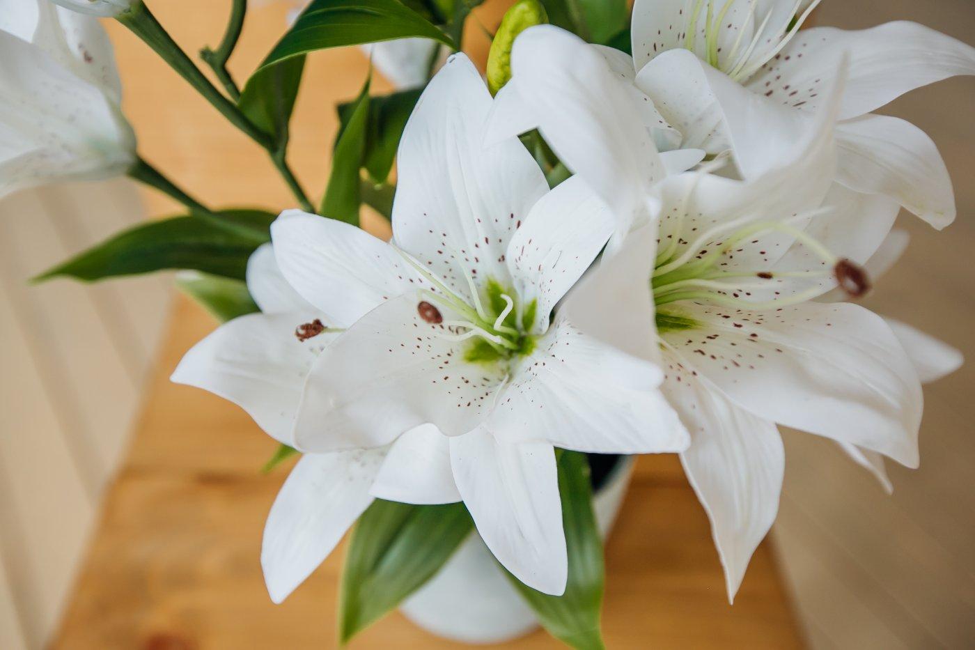 Комнатные цветы лилия фото с названиями