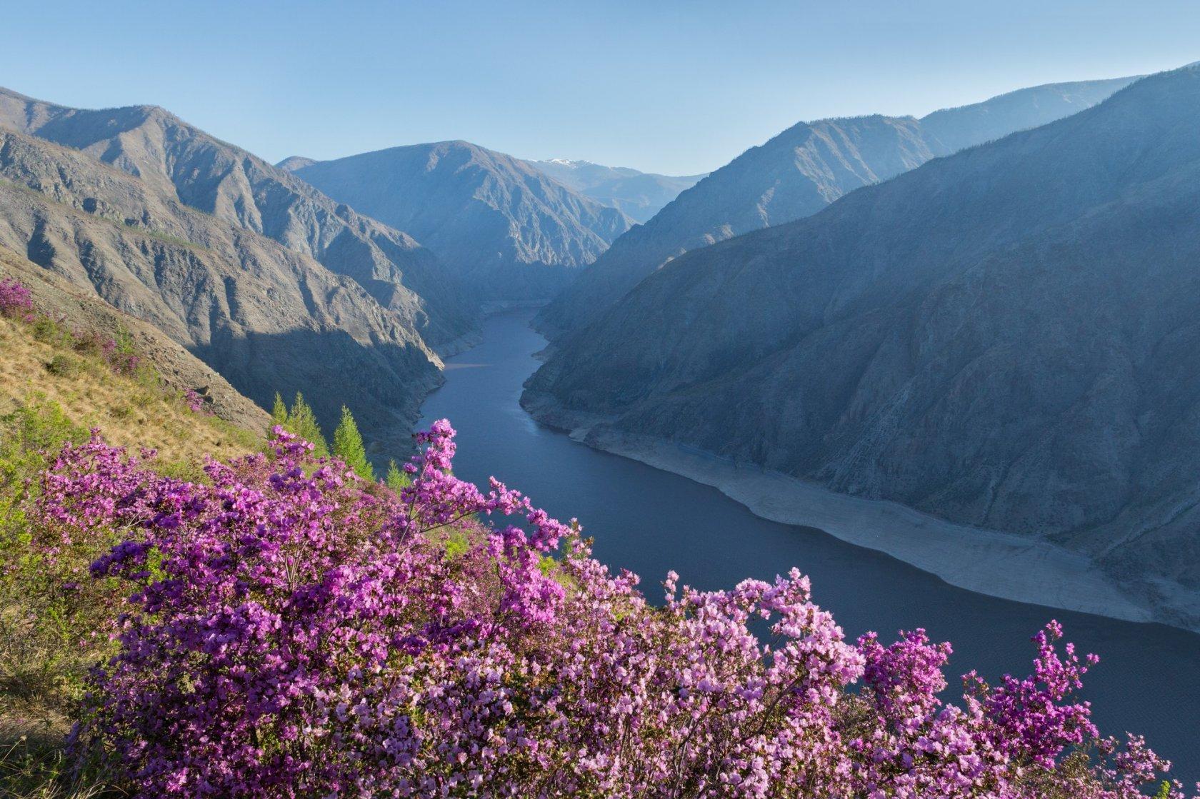 Цветы в саянах фото