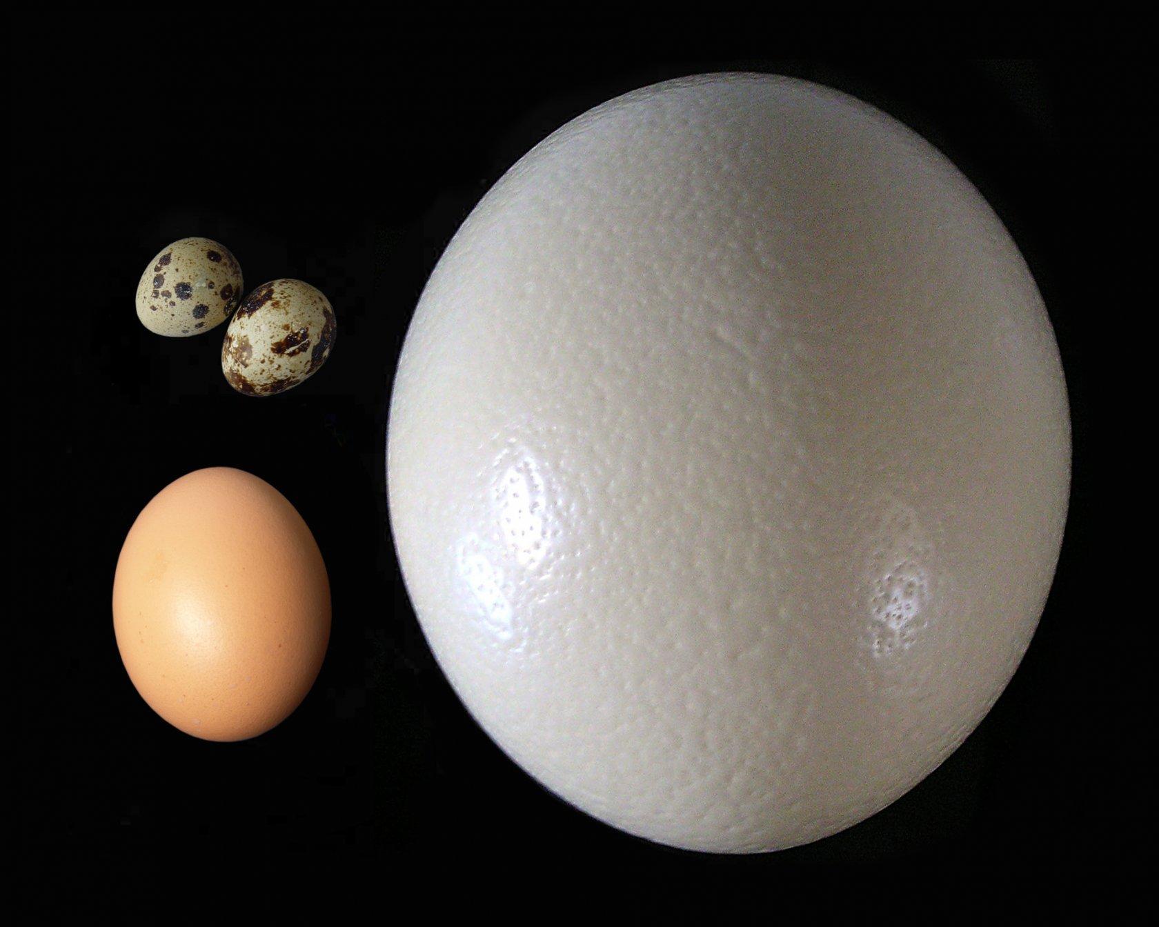 Блюда из страусиных яиц