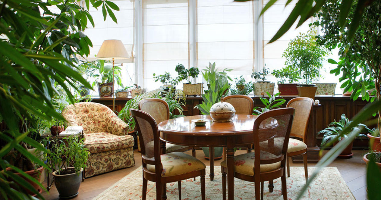 Комнатные цветы в интерьерах квартир фото