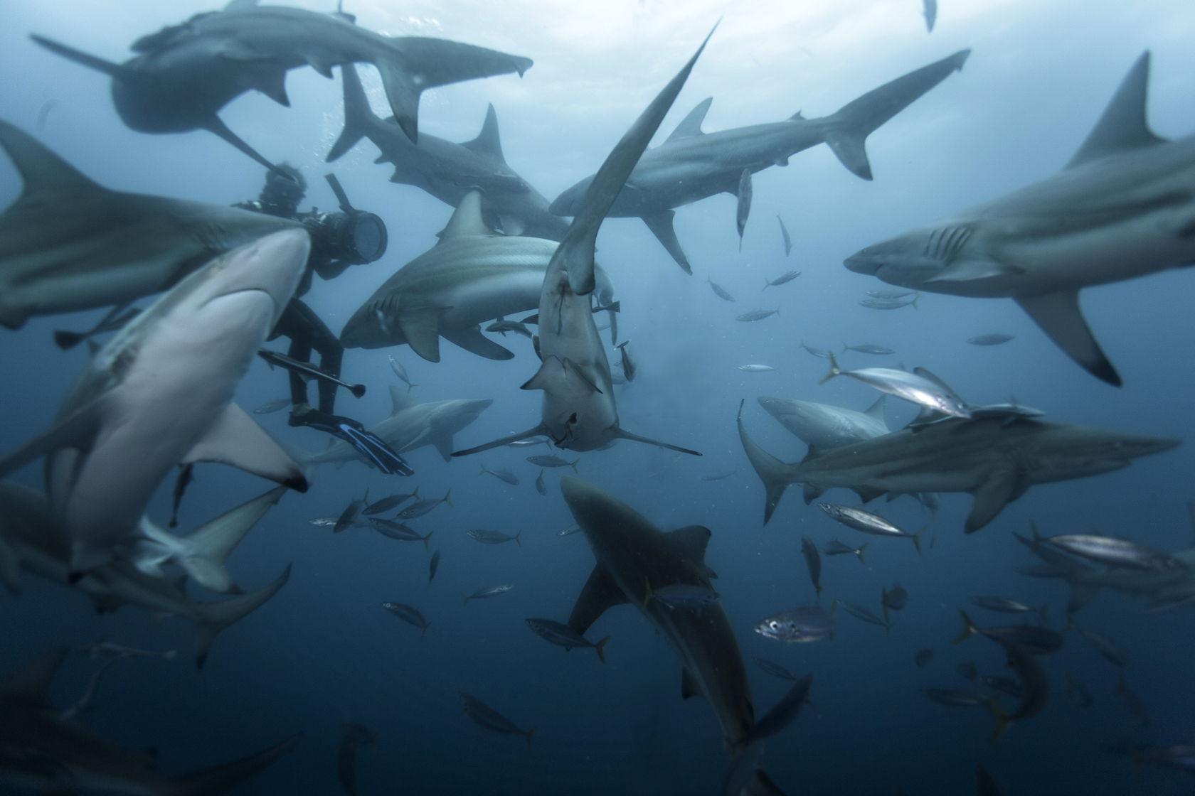 фото много акул доступны как