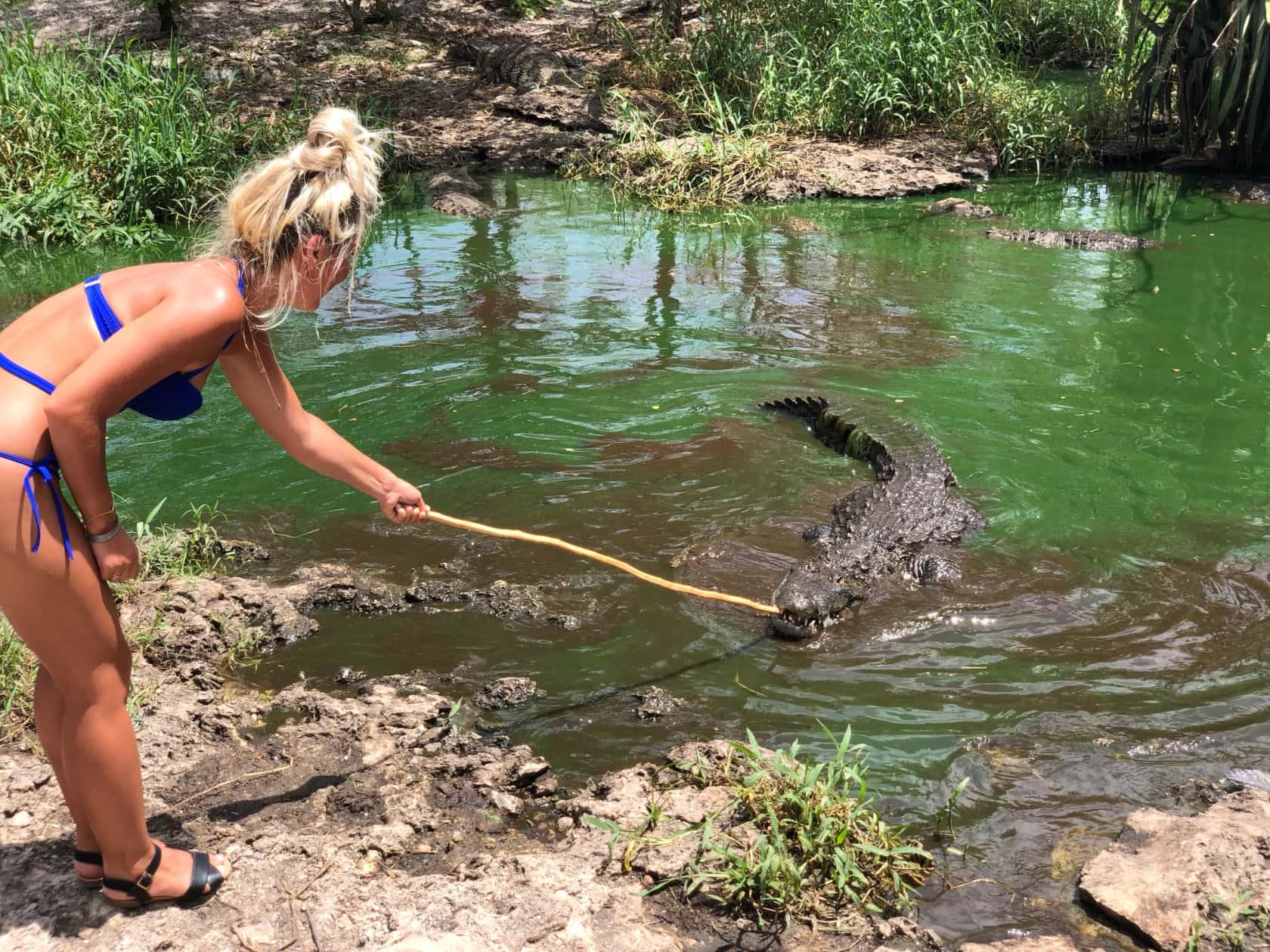 Крокодиловая ферма в Мексике