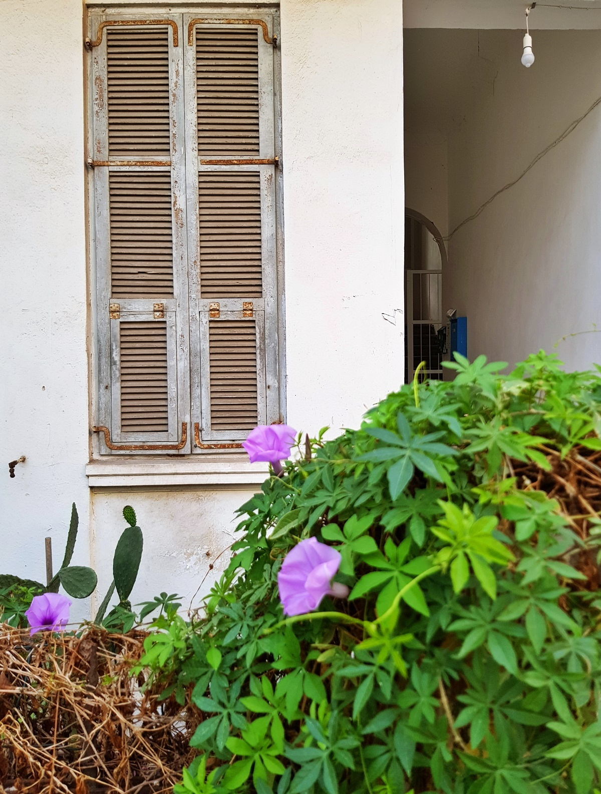 В Белом городе (Тель-Авив). Блог Вкусный Израиль.