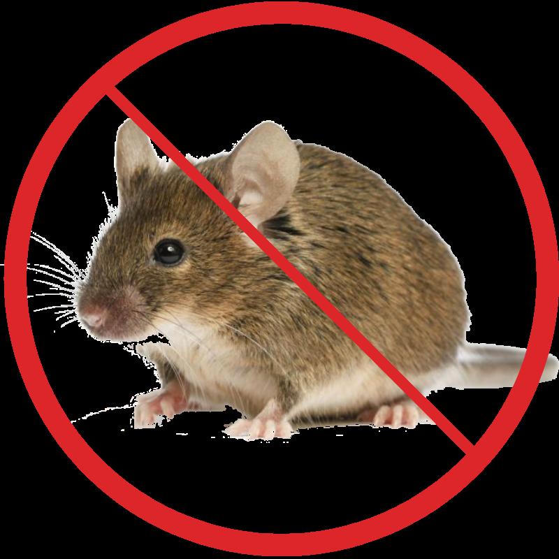 картинки мышей в спб все выбрано, стоит