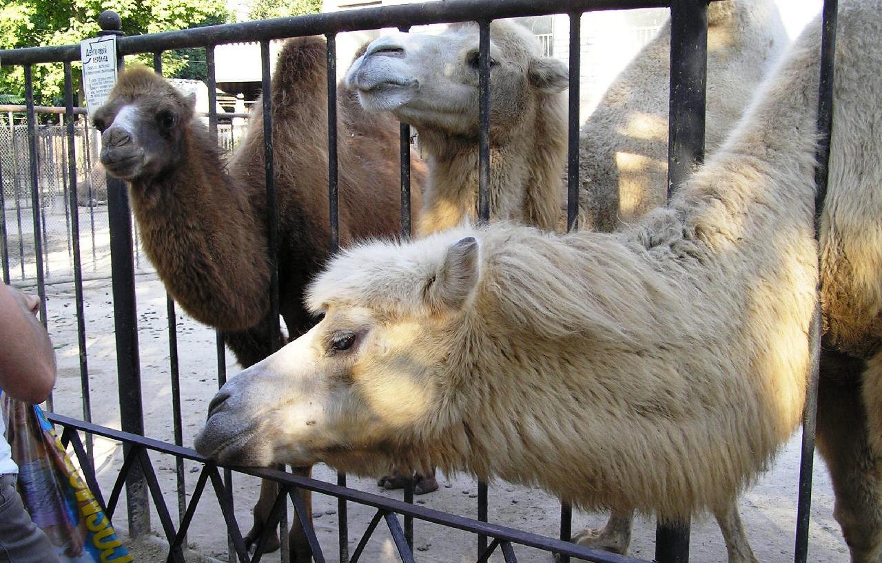 Открытку, зоопарк с животными картинки с надписями