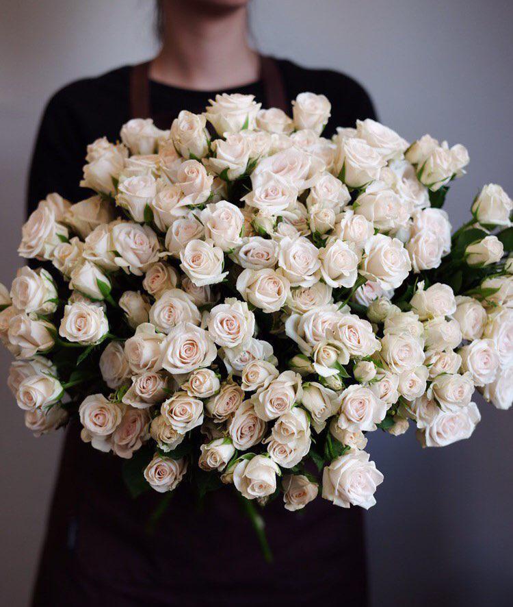 пересматривалась зачастую роза жозефина фото трассе
