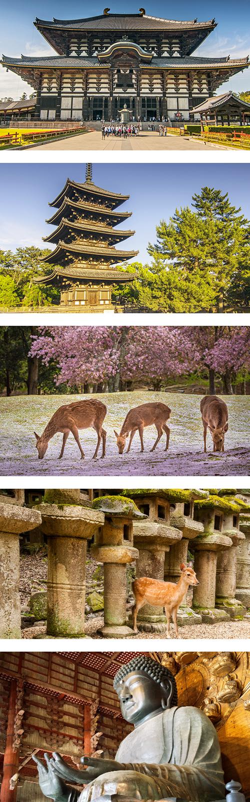 Олени на фоне сакуры прогуливаются в парке города Нара