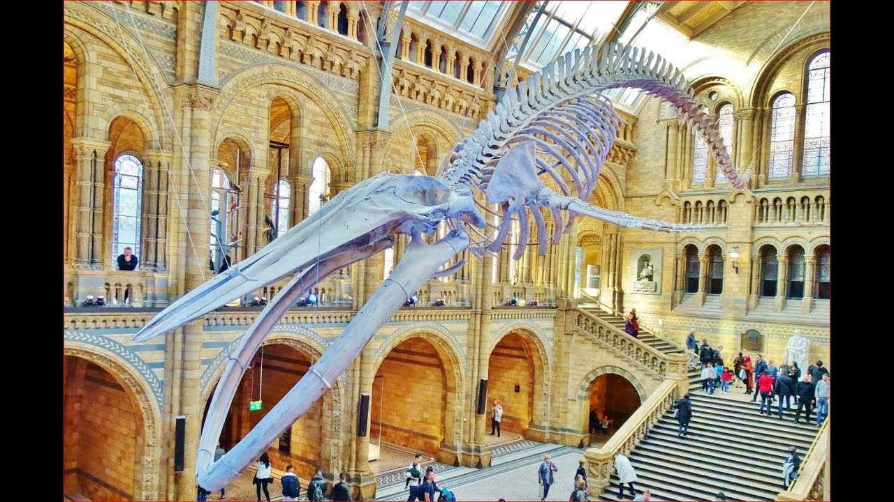 Музей естевознания