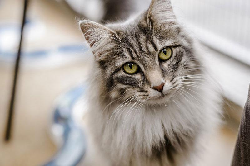 Проблемы пожилых кошек