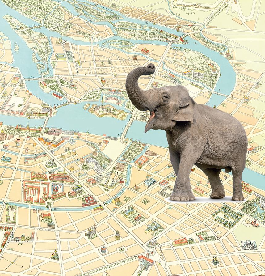 В провинции слонов боготворили, а в Петербурге дразнили