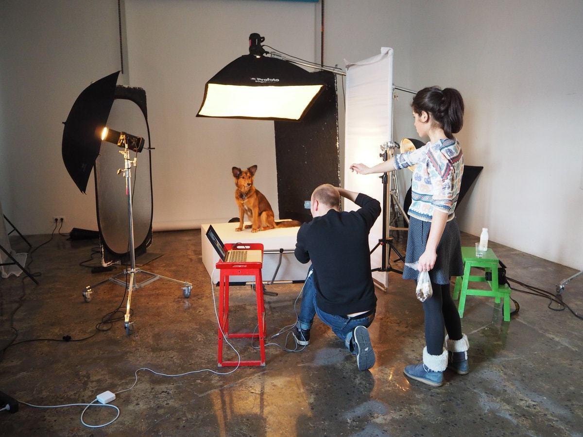 как правильно фотографировать животных пробовала его