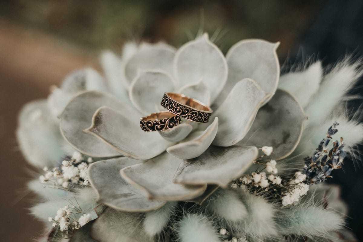 Букет невесты из эхиверий и лагуруса. Фото 3
