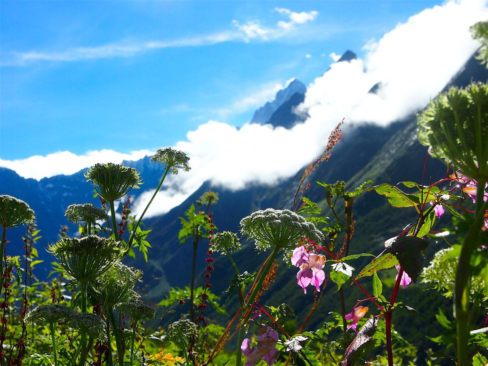 для натюрморта долина цветов уникальный уголок индии фото заключается