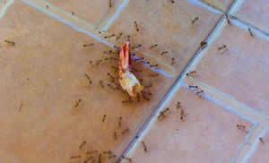Вред, который наносят насекомые