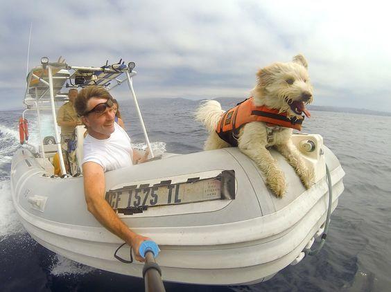 Почти все собаки любят воду, так что они будут рады составить Вам компанию на яхте