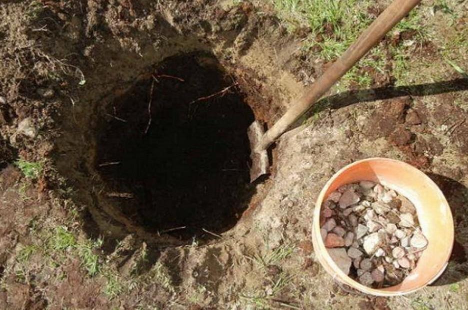 Для двухлетнего куста ширина ямы должна быть 80х80 см, глубина – 0.4 м.