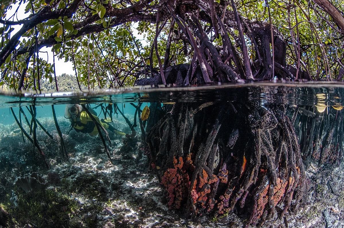 мангровые леса сокращают co2