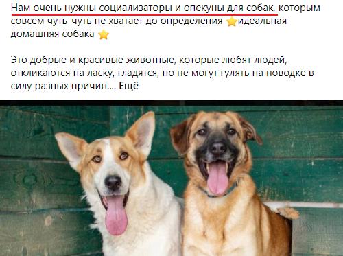 социализаторы для собак