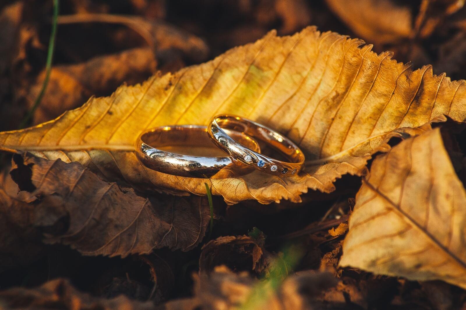 Картинка осень кольца