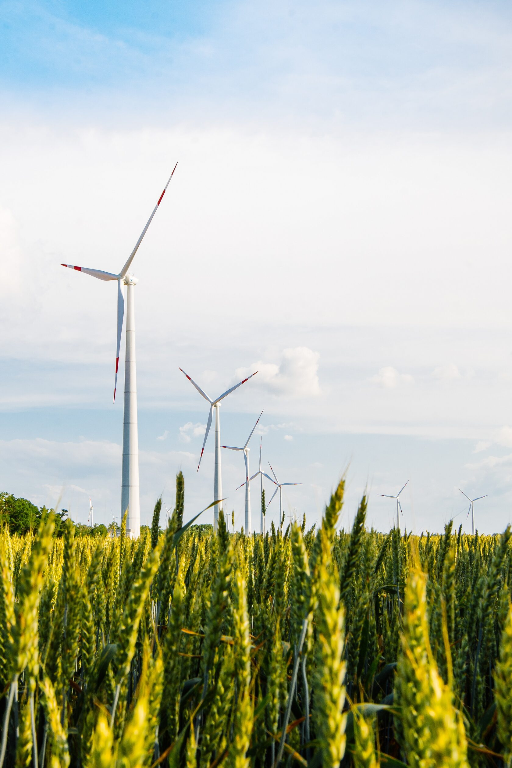 В Ростовской области введён шестой ветропарк