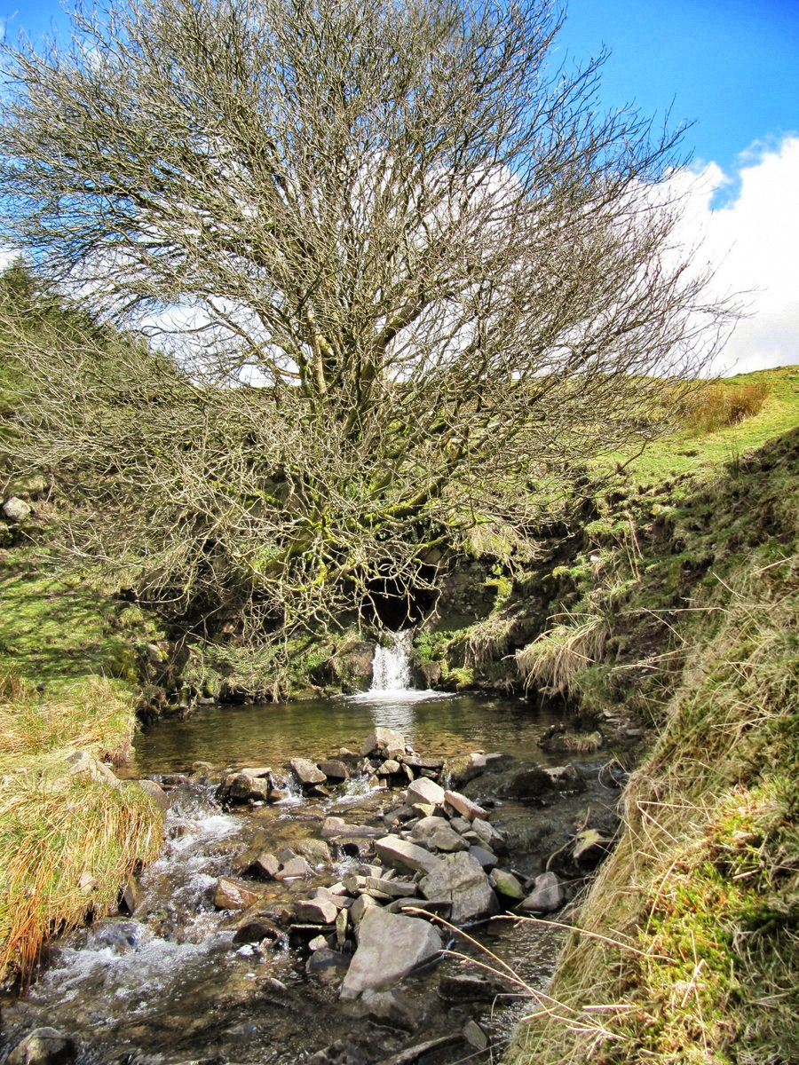 Trees and stream in Wales