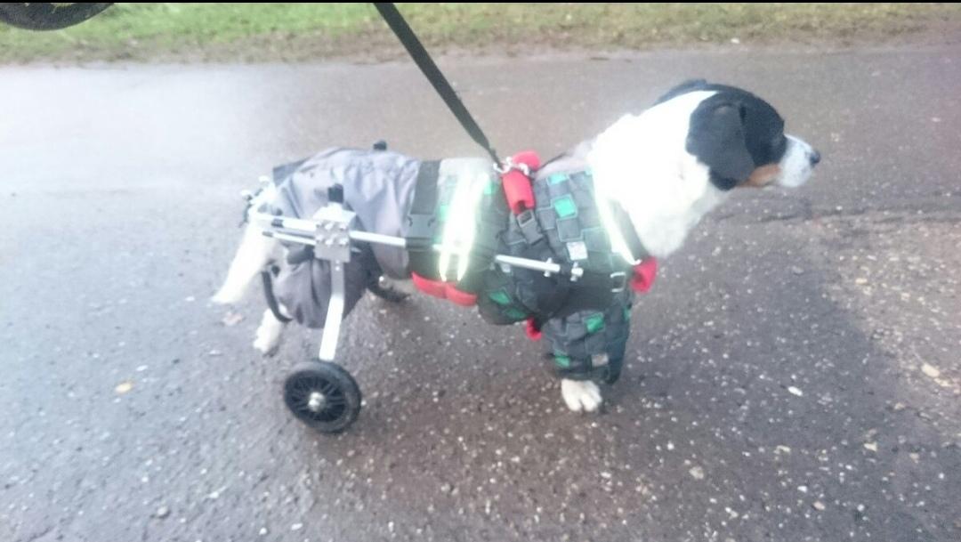 Купить инвалидной коляску для собак