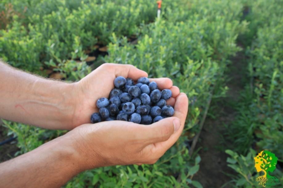 Активные антиоксиданты, содержащиеся в плодах, замедляют преждевременное старение организма