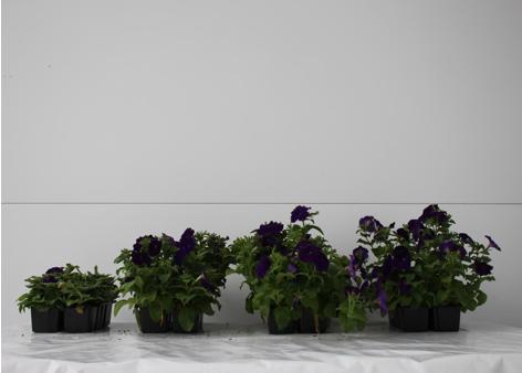 Светодиодное освещение для роста растений
