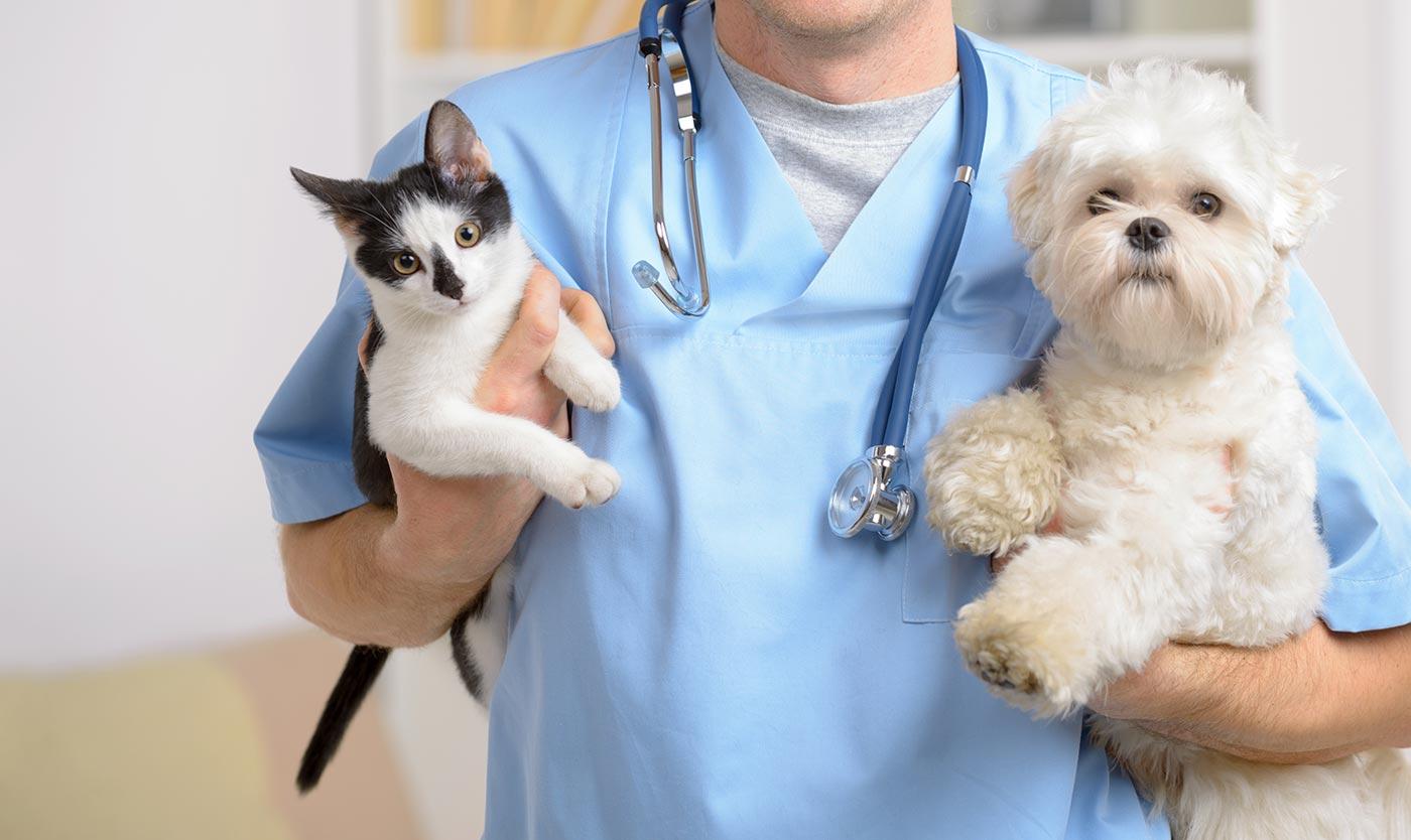 Картинки по запросу онлайн консультация ветеринара преимущества