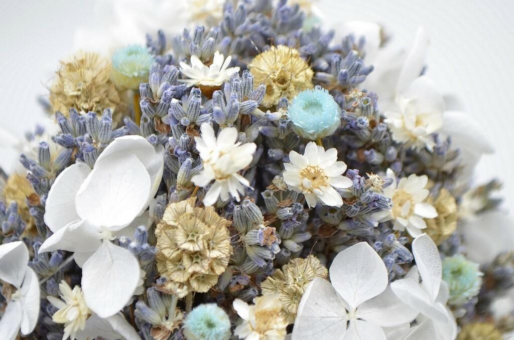 фото  сухих цветов
