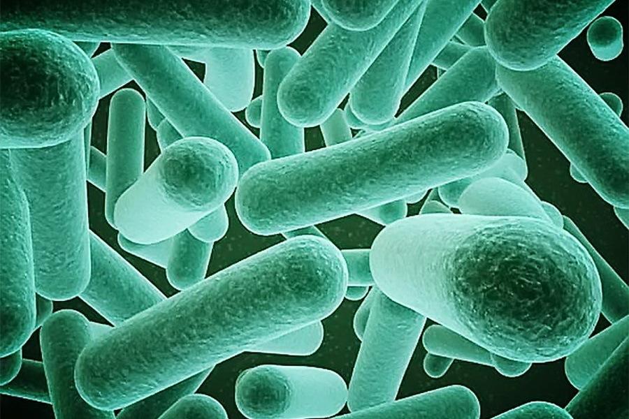 Какие процессы происходят внутри био септика