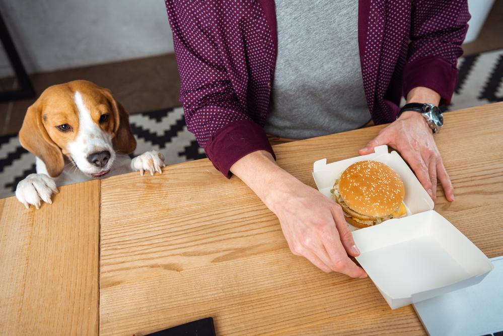 вред бургеров и влияние фастфуда на здоровье - в блоге спа-манго