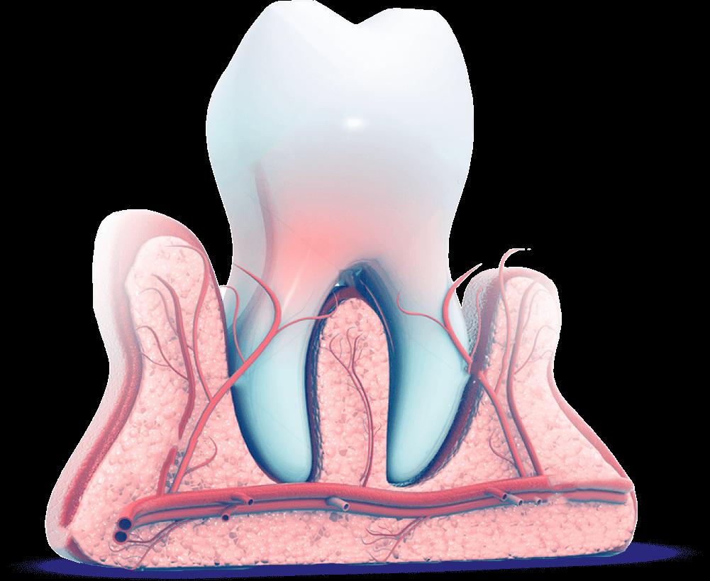 стоматология в хабаровске