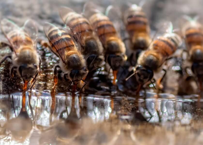 Подкормка пчел фото