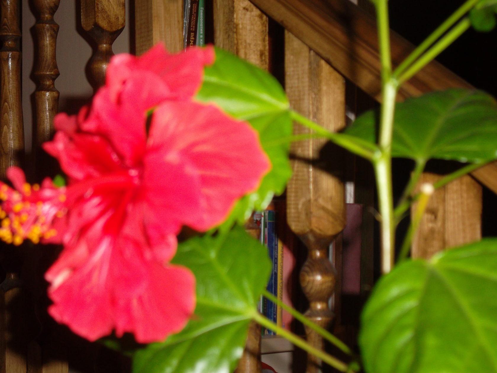 Результат замачивания семян цветов в 0.02% растворе кислоты фото - отчет