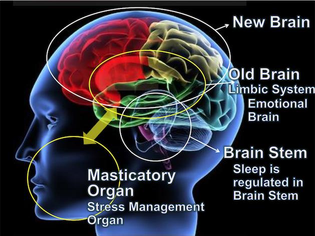 Жевательный орган и стресс менеджмент