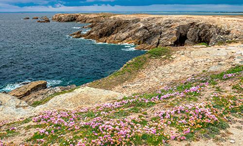 Вересковые луга на побережье полуострова Киберон