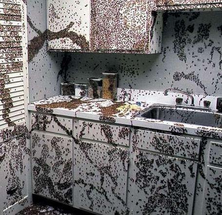 Нашествие тараканов на кухне