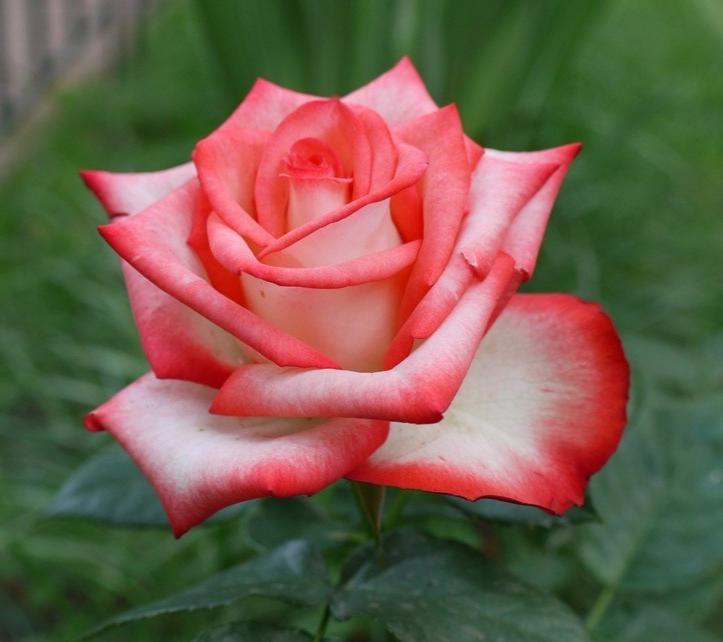 носуленко роза данте фото стильное женское пальто
