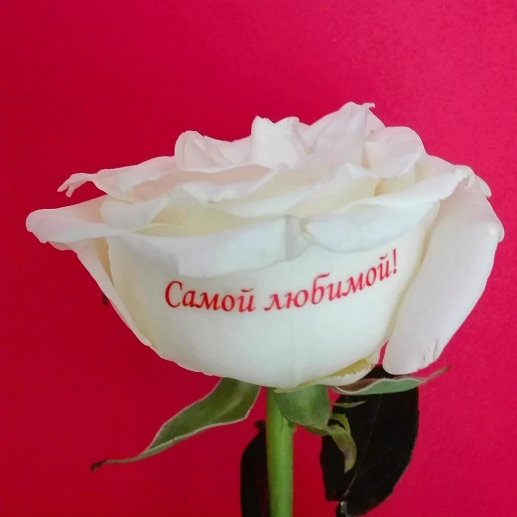 Открытка мая, красивые картинки розы с надписью