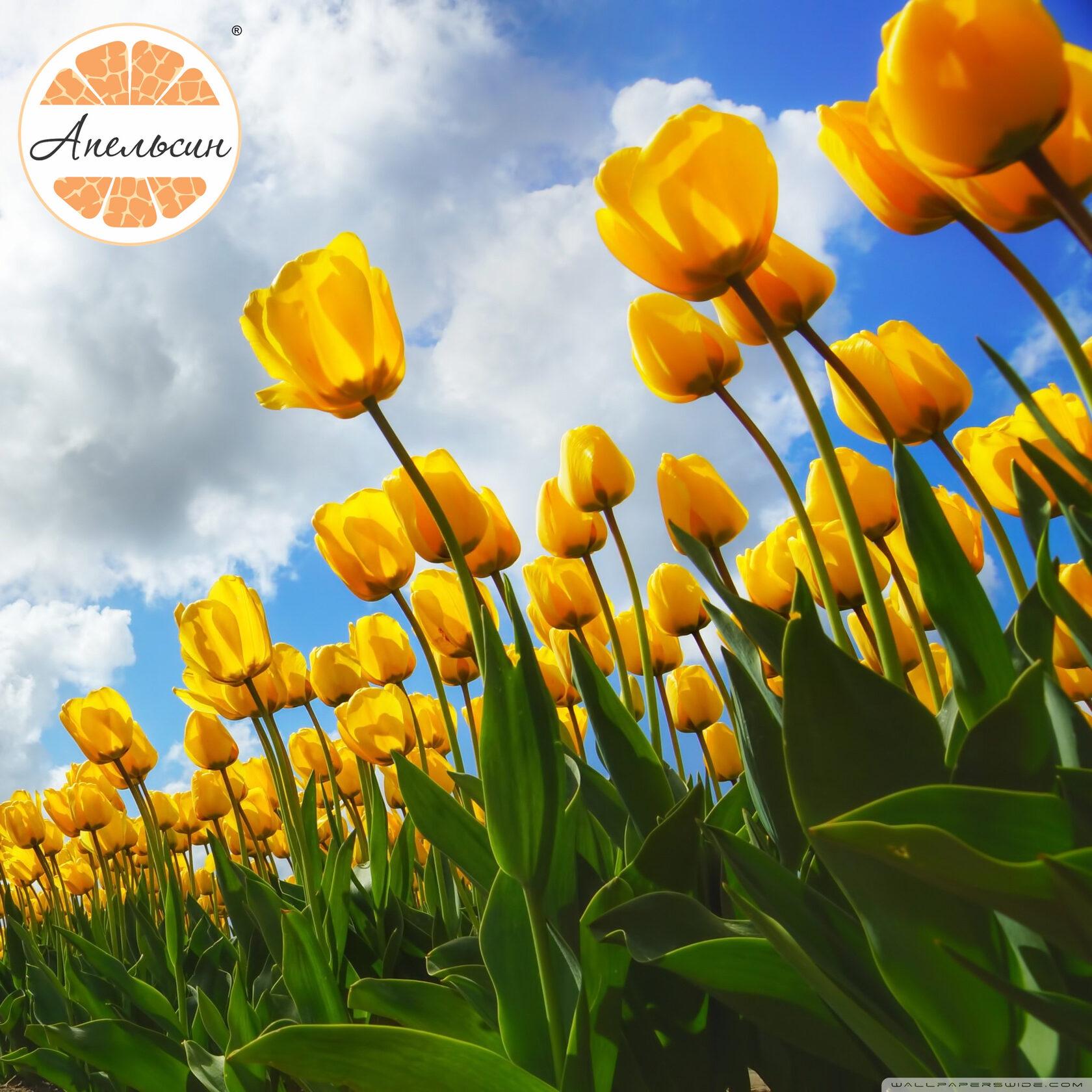 новый весенний апельсиновый плейлист для отличного настроения