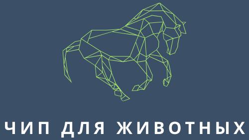Чип для животных