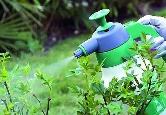Чтобы средство для обработки равномерно распределялось по кусту, необходимо использовать опрыскиватель или пульверизатор