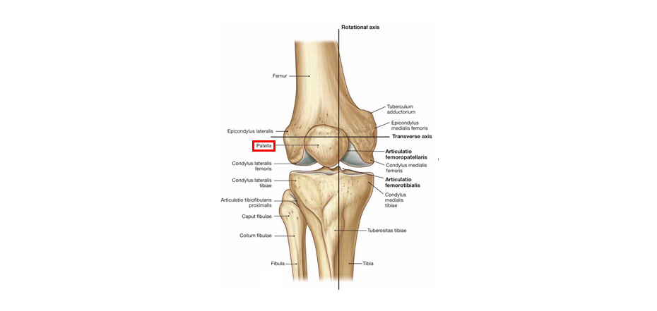 Изображение коленного сустава из фитнес обучения для инструкторов