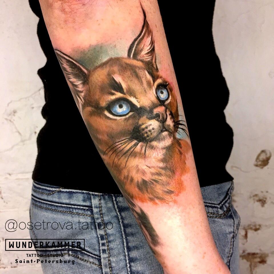Цветные тату, реализм, кот