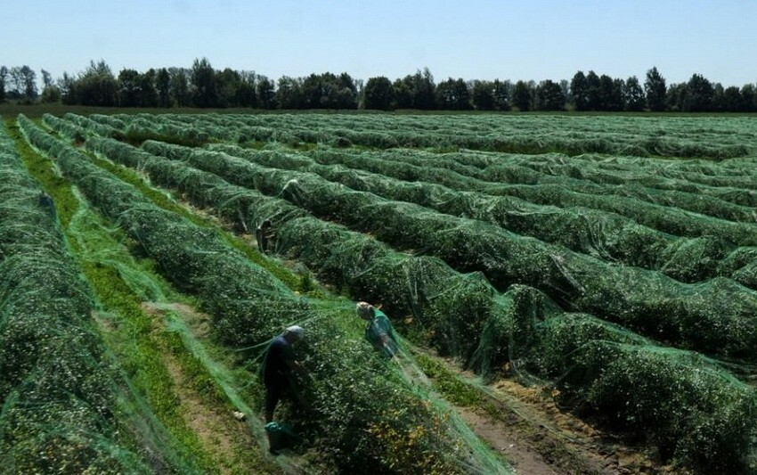 Садовая сетка позволяет эффективно бороться с вредителями