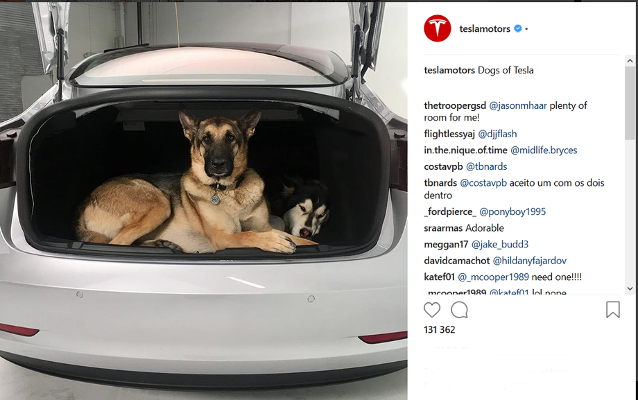 Dog in the trunk