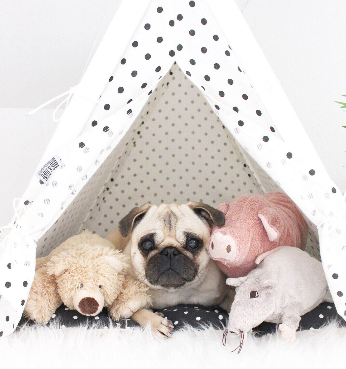 In DogAndTeepee we believe dogs and cats need privacy as much as people do.