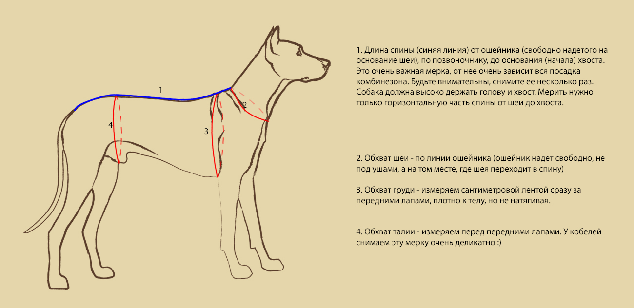 картинка измерения собаки
