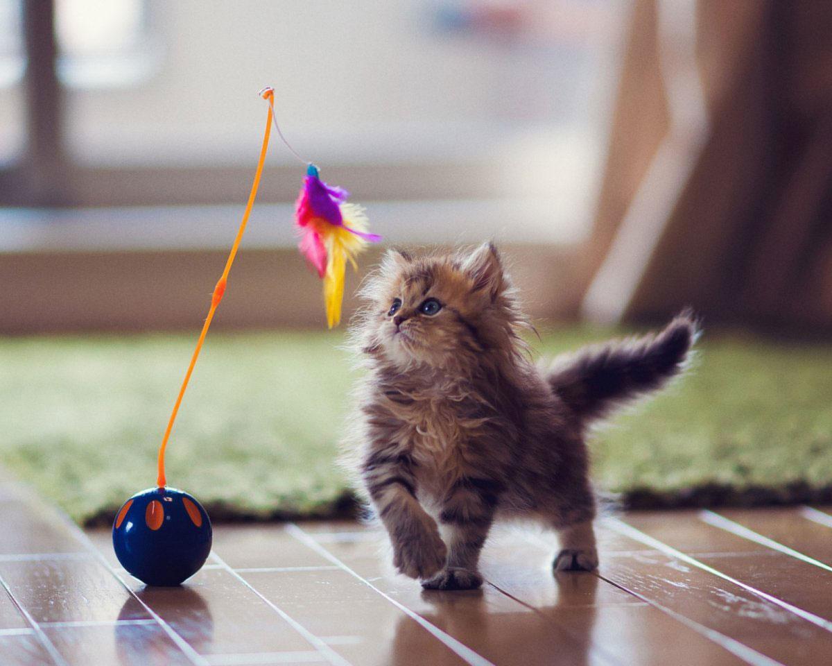 агрессивный кот что делать